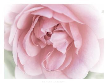 Eva Bane Pretty Pink Blooms II Giclee Canvas