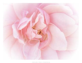 Eva Bane Pretty Pink Blooms III Open Edition Giclee - Matte