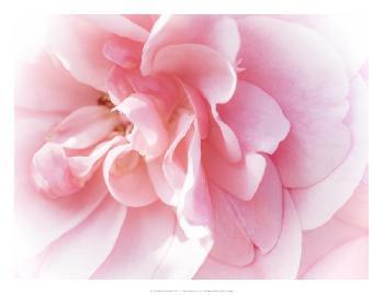 Eva Bane Pretty Pink Blooms IV Open Edition Giclee - Matte