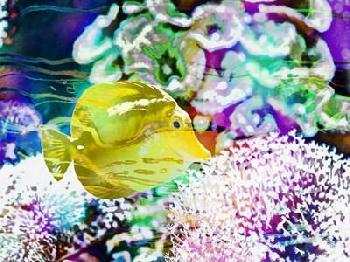 Eva Bane Vibrant Reef II Giclee Canvas