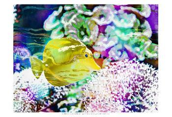 Eva Bane Vibrant Reef II Prints