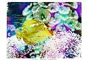 Eva Bane Vibrant Reef II