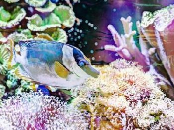 Eva Bane Vibrant Reef III Giclee Canvas