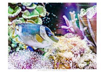 Eva Bane Vibrant Reef III Prints
