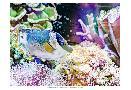 Eva Bane Vibrant Reef III