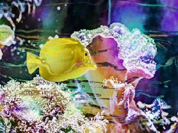 Eva Bane Vibrant Reef IV Giclee Canvas