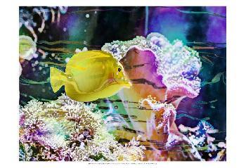 Eva Bane Vibrant Reef IV Prints