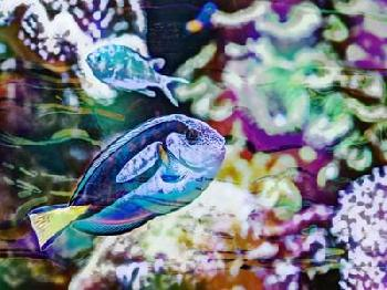 Eva Bane Vibrant Reef V Giclee Canvas