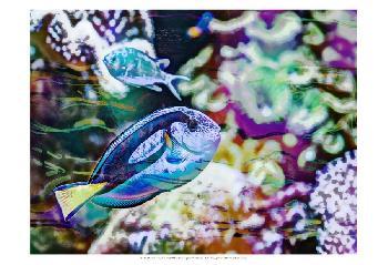 Eva Bane Vibrant Reef V Prints