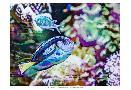 Eva Bane Vibrant Reef V