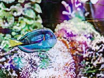 Eva Bane Vibrant Reef VI Giclee Canvas