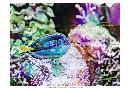 Eva Bane Vibrant Reef VI