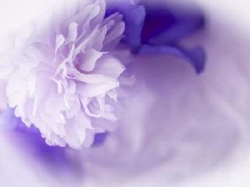 Eva Bane Dreamy Florals In VIolet I Giclee Canvas
