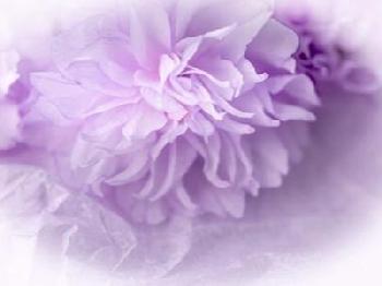 Eva Bane Dreamy Florals In VIolet II Giclee Canvas
