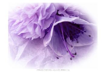 Eva Bane Dreamy Florals In VIolet III Prints