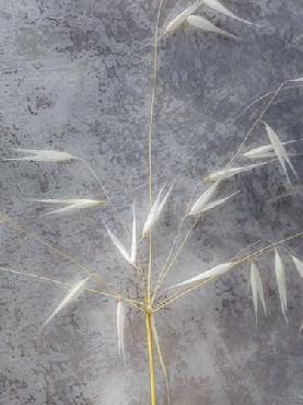 Eva Bane Moonlit Dream I Giclee Canvas