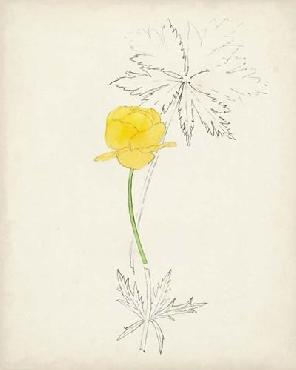 Anonymous Watercolor Botanical Sketches VIi Open Edition Giclee - Matte