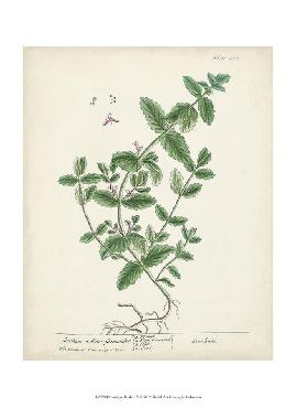 Anonymous Antique Herbs Ix Prints