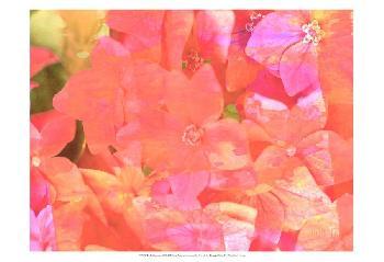 Eva Bane Joyful Summer II Prints