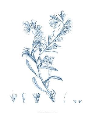 Vision Studio Antique Botanical In Blue II Open Edition Giclee - Matte