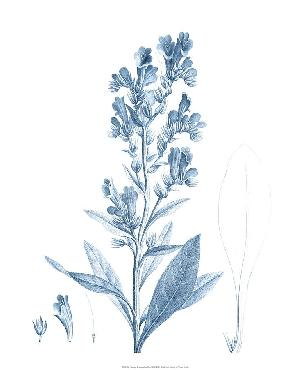 Vision Studio Antique Botanical In Blue III Open Edition Giclee - Matte