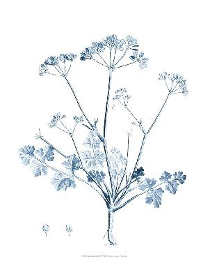 Vision Studio Antique Botanical In Blue IV Open Edition Giclee - Matte