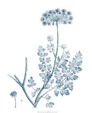 Vision Studio Antique Botanical In Blue V Open Edition Giclee - Matte