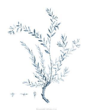 Vision Studio Antique Botanical In Blue VIi Open Edition Giclee - Matte