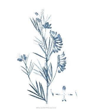 Vision Studio Antique Botanical In Blue Ix Open Edition Giclee - Matte