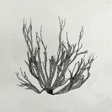Vision Studio Lustr Coastal Seaweed I In Pearl White LUSTR