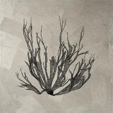 Vision Studio Lustr Coastal Seaweed I In Aged Silver LUSTR