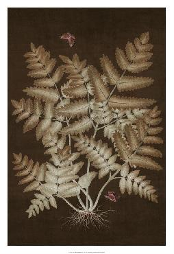 Paul Montgomery Ferns In Roasted Brown I Giclee Canvas