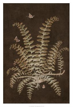 Paul Montgomery Ferns In Roasted Brown V Giclee Canvas