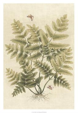 Paul Montgomery Ferns In Antique I Giclee Canvas