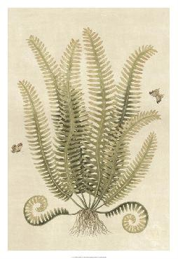 Paul Montgomery Ferns In Antique III Giclee Canvas