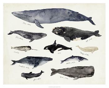 Victoria Barnes Whale Chart III Giclee Canvas