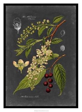 Vision Studio Midnight Botanical II Giclee Canvas