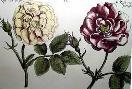 Crispen De Passe Elephant Roses I Oversize