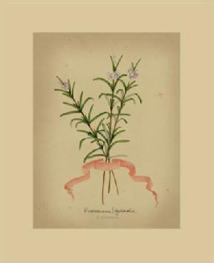 Jennifer Goldberger Herb Series III Canvas