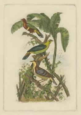Vision Studio Exotic Birds II