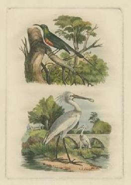 Vision Studio Exotic Birds IV