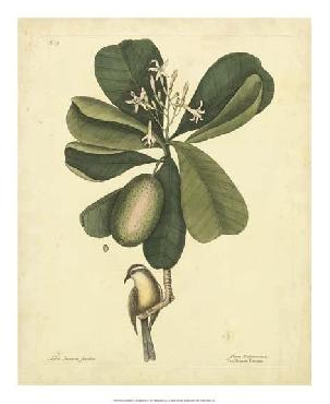 Mark Catesby Bird & Botanical III Giclee