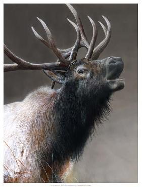 Kevin Daniel American Icon -  Elk Giclee on Canvas
