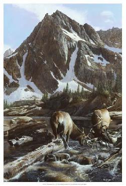 Kevin Daniel Mountainside Elk II Giclee