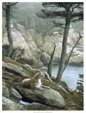Kevin Daniel Cougar Giclee on Canvas