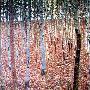 Gustav Klimt Beechwood Forest 1903
