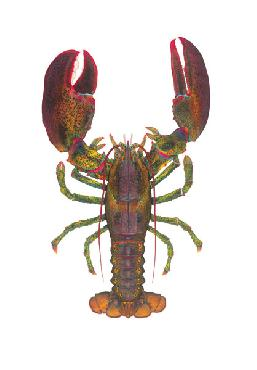 Flick Ford 4 Lb Lobster Signed Open Edition Giclee on Canvas