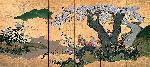Nagataka Cherry Blossoms With Pheasants