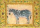 Ustad Mansur Zebra
