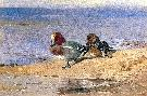 Archibald Thorburn A Pair Of Wigeon